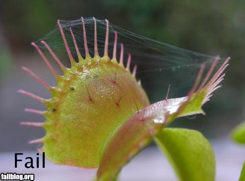fail-owned-flytrap-fail